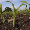 The Importance of Soil Sampling