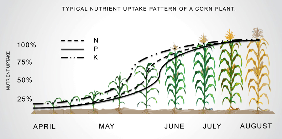 Typical Nutrient Uptake Pattern of a Corn Plant