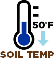 Soil Temp at 50 degrees or less
